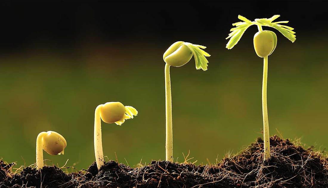 Aplicaci n de las hormonas vegetales en los cultivos for Hormonas en las plantas