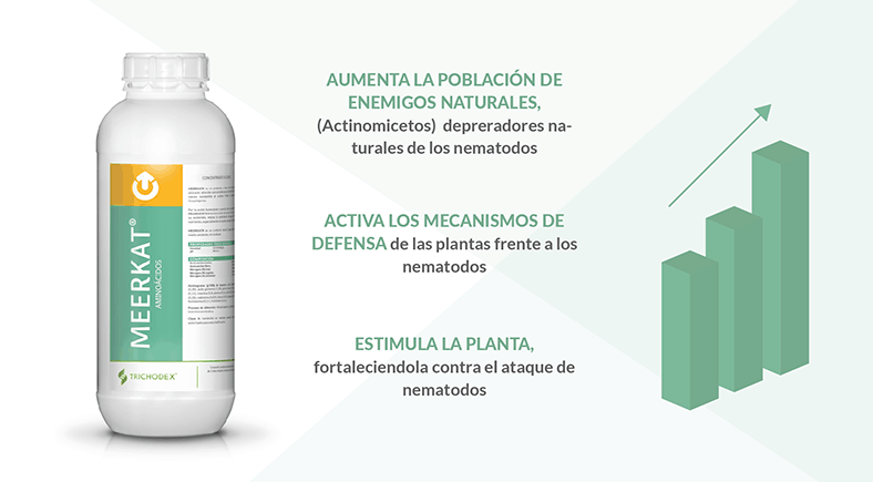 Nueva estrategia de TRICHODEX. El uso de MEERKAT® frente al estrés biótico causado por nematodos fitoparásitos.