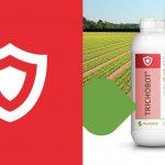 Bioprotección frente a la pudrición blanca de la lechuga